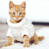 Gigner kitten royalty free stock photography