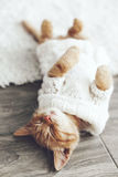 Gigner kitten Royalty Free Stock Photos