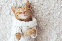 Gigner kitten royalty free stock image