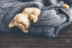 Gigner kitten sleeping Royalty Free Stock Photo