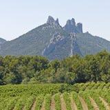 Gigondas的葡萄园。 普罗旺斯。 库存照片