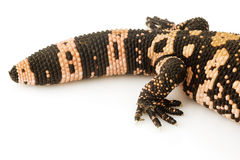 Gila Monster (Heloderma suspectum) Stock Photos