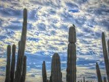 Gila Woodpecker Perches Above il a excavé le nid photographie stock libre de droits