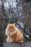 Gilbi katt på väggen Arkivfoton