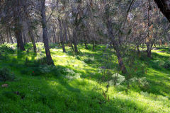 Gilboa forest, Israel Royalty Free Stock Photos