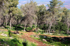 Gilboa forest, Israel. Green spring forest at Gilboa mountain, Israel Royalty Free Stock Photo