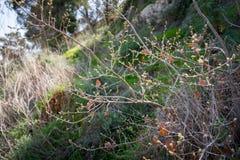 Gilboa slinga bredvid kibbutzer Hephzibah Arkivbild