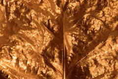 Gilded Leaf Closeup Royalty Free Stock Images