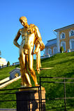 Gilded statue of a Nude male in Peterhof. Saint-Petersburg. Russ stock image