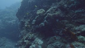 gili印度尼西亚海岛在海龟水下的世界附近的lombok meno 游泳在珊瑚礁中的大海的鱼在海底 观看的鱼和海洋动物一会儿 影视素材