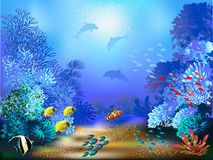 gili印度尼西亚海岛在海龟水下的世界附近的lombok meno 库存例证