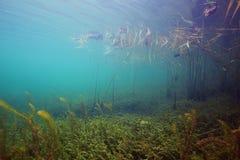 gili印度尼西亚海岛在海龟水下的世界附近的lombok meno 图库摄影