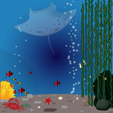 gili印度尼西亚海岛在海龟水下的世界附近的lombok meno 库存照片