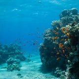 gili Indonesia wyspy lombok meno blisko dennego żółwia underwater światu Obrazy Stock