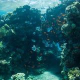 gili Indonesia wyspy lombok meno blisko dennego żółwia underwater światu Zdjęcie Stock