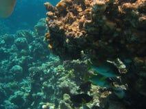 gili Indonesia wyspy lombok meno blisko dennego żółwia underwater światu Zdjęcia Royalty Free