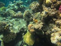 gili Indonesia wyspy lombok meno blisko dennego żółwia underwater światu Fotografia Royalty Free