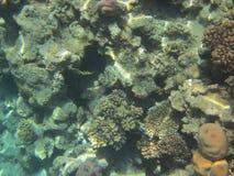 gili Indonesia wyspy lombok meno blisko dennego żółwia underwater światu Zdjęcie Royalty Free