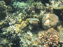 gili Indonesia wyspy lombok meno blisko dennego żółwia underwater światu Fotografia Stock