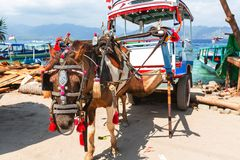 Free Gili Transport Royalty Free Stock Image - 54170736