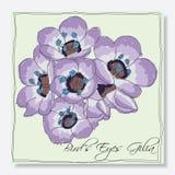 Gilia kwiat ilustracja wektor