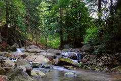 Gill in the forest. Mountain gill eith forest and stones Stock Image