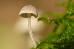 Gill fungus Stock Photo