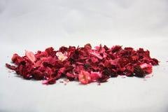 Gillar söt färg för torra blommor med lukten Arkivbild