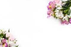 Gillyflowers rosa e porpora con alstroemeria sul backgrou bianco Fotografia Stock