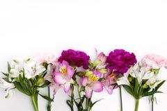 Gillyflowers rosa e porpora con alstroemeria sul backgrou bianco Fotografia Stock Libera da Diritti