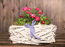 Gillyflowers in a white Basket Stock Image
