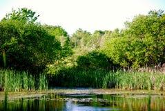 Gilsland-Bauernhof-Teich Stockfoto