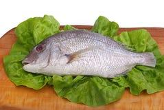 Gilt head bream 09. Fresh Dorade fish - Gilt head bream royalty free stock photography