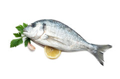 Gilt-head bream. With lemon garlic and parsley on white background Royalty Free Stock Photography