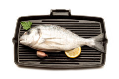 Gilt-head bream Royalty Free Stock Image