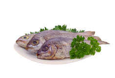 Gilt head bream. Prepared fish Stock Photos