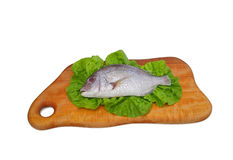 Gilt head bream. Fesh fish Royalty Free Stock Photos