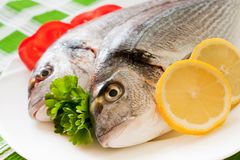 Gilt-head bream Stock Image
