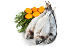 Gilt head bream. Uncooked gilt head bream on a plate with condiments stock image