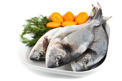 Gilt head bream. Uncooked gilt head bream on a plate with condiments Stock Photos