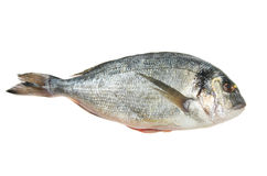 Gilt head bream. Fish isolated on white stock photo