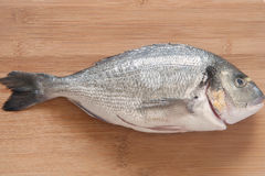 Gilt Head Bream Royalty Free Stock Photo