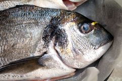 Gilt head bream. Close up image Royalty Free Stock Photography