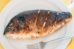 Gilt-head bream. Detail of a  Gilt-head bream Royalty Free Stock Photography