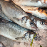 Gilt-head bream(dorade) on ice. At the seafood booth Royalty Free Stock Images