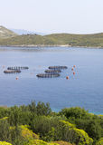 Gilt-head bream farming. In the ionic sea. Albania royalty free stock images