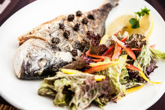 Gilt-head bream fish Stock Photos