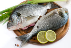 Gilt-head bream fish Royalty Free Stock Photo