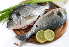 Gilt-head bream fish royalty free stock photo