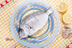 Gilt-head bream fish. On a plate stock photography